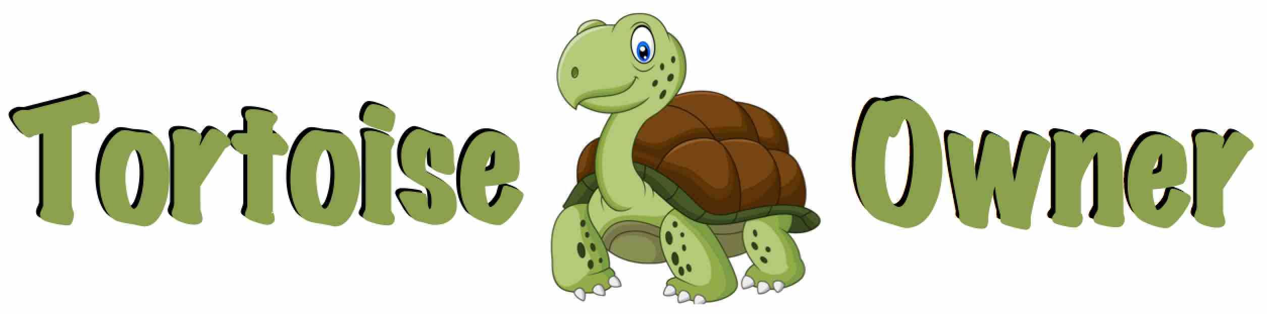 Tortoise Owner